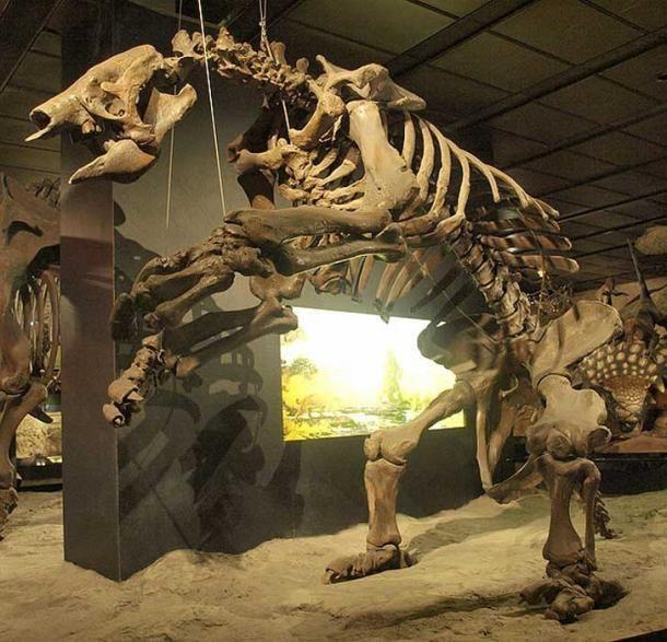 Remains of a Giant ground sloth (Eremotherium laurillardi).