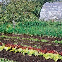 Zeleninová záhrada a trojročný plán striedania plodín
