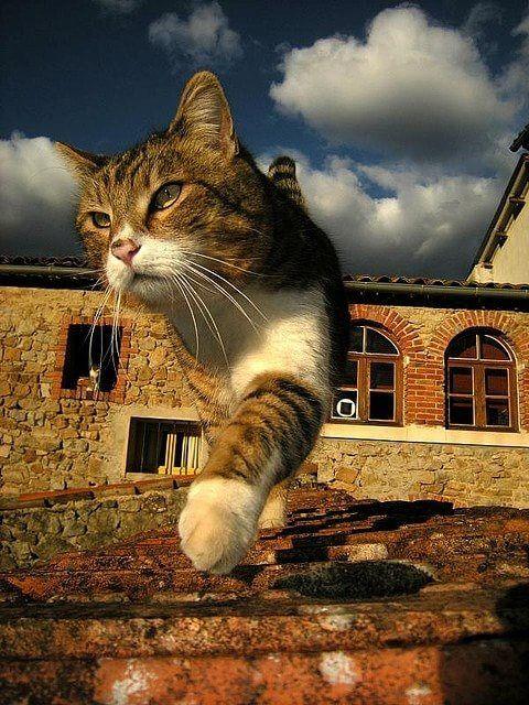 猫と風景9