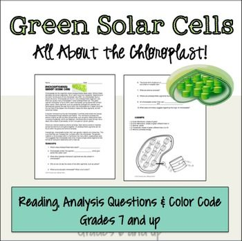 Photosynthesis Chloroplast Activity Photosynthesis