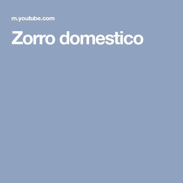 Zorro domestico