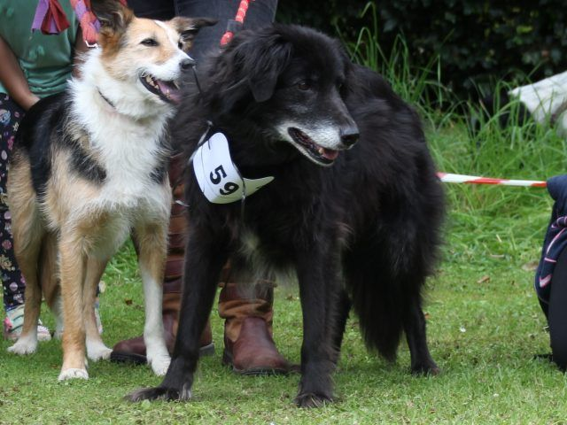 It's going to be doggy heaven again as Traquair holds its second Dogs' Day Out Event in July this year.  After the great success last year we will be welcoming all dogs, their owners and those who love them.