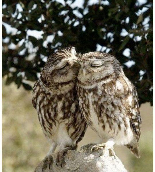 Love Owls hoot hoot