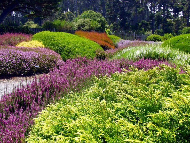 Mendocino Coast Botanical Gardens Fort Bragg Ca Hours Address Top Rated Attraction Reviews