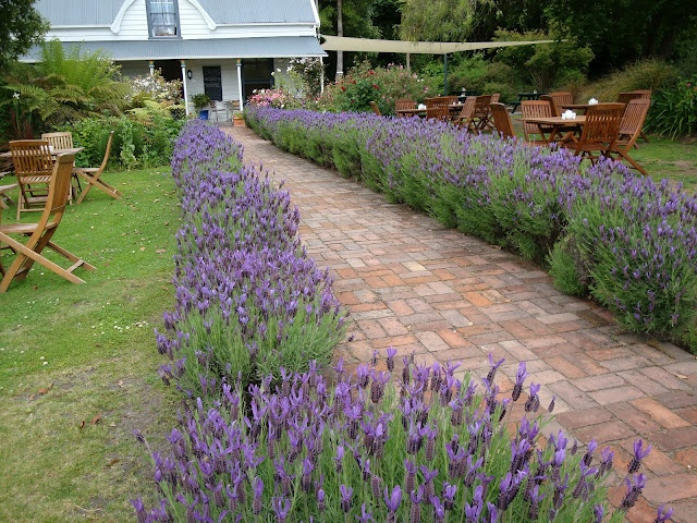 Lavender hedge so much better than shrubbery i would for Garden design ideas lavender