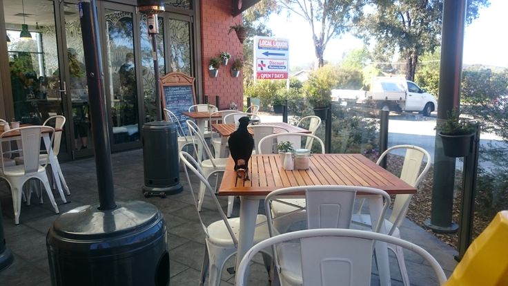 A Magpie joining us for breakfast