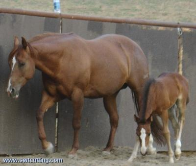 Peek A Boo Duel with 2006 Smart Little Pepinic FIlly