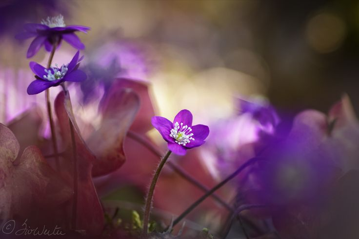 Spring flowers in the forest by Siv Wester on 500px