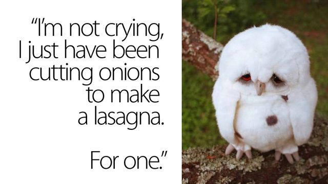 saddest owl in the world.