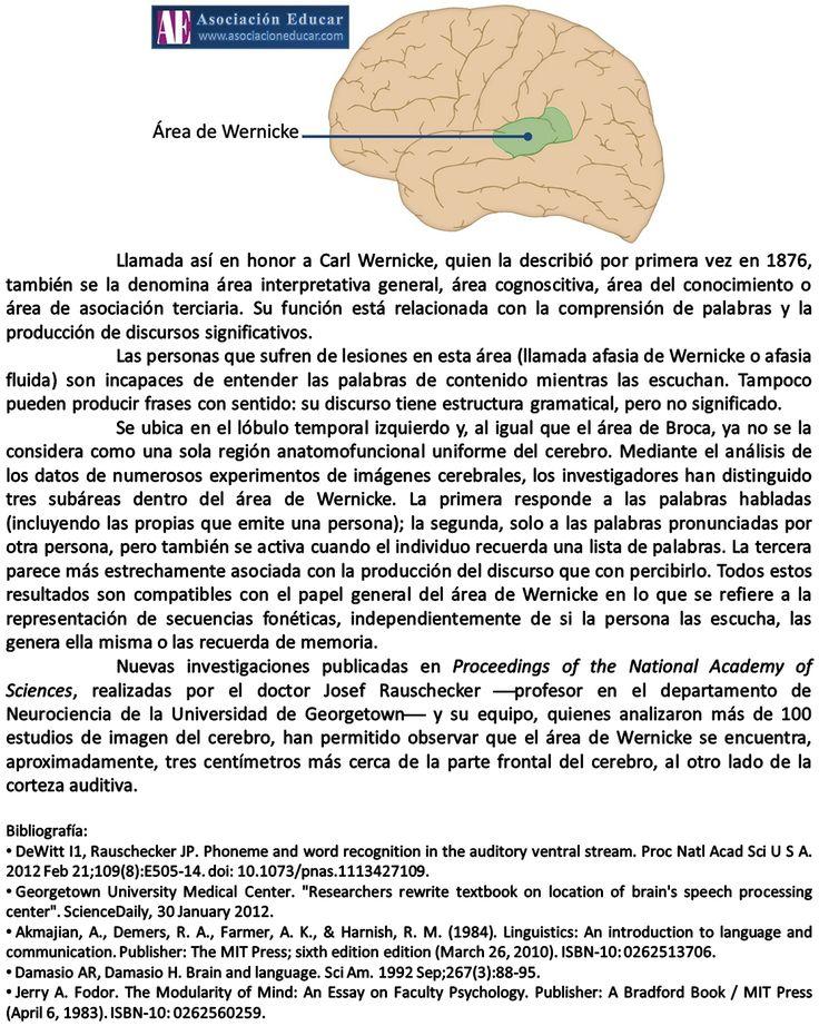 Infografía neurociencias: Área de Wernicke | Asociación Educar para el Desarrollo Humano