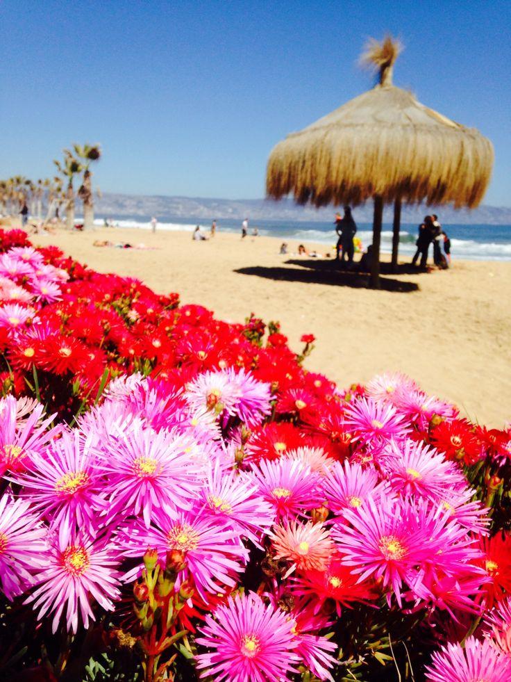Playa beach Chile Reńaca