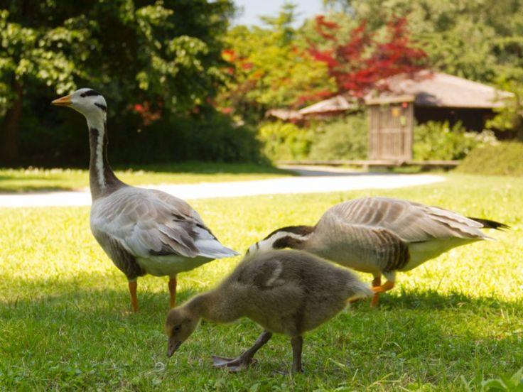 Ideal Ausflugsziele mit Hund in Deutschland Bayern M nchen Englischer Garten Tierische Begegnungen im