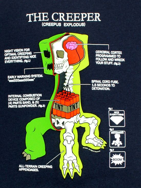 Cutaway of the common Creeper (Creepus Explodus) from Minecraft