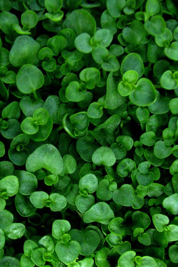 Perennial Ground Cover Full Sun: 16 Ground Cover Perennials To Try Out In Your Yard This
