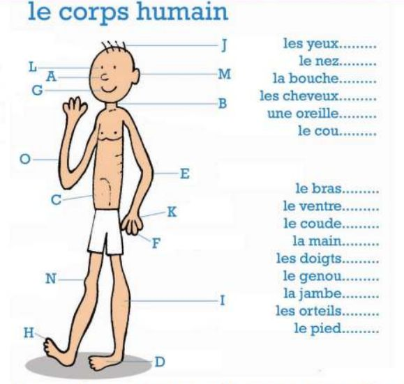 67 best images about le corps humain on pinterest for Interieur du corps humain image