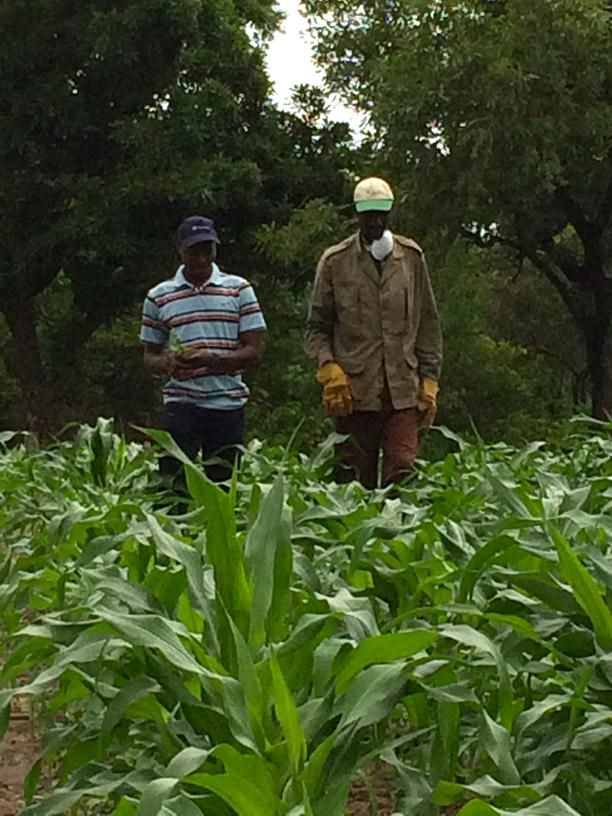 Stewardship in action in Burkina Faso. Cotton farmer, Francis Millogo, is visited by an Arysta LifeScience trainer.