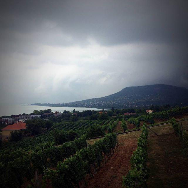 Vihar közeleg! #vargawine #vargabor #vargapinceszet #vargapincészet #badacsonyörs #badacsonyors #badacsony #vihar #balaton #storm