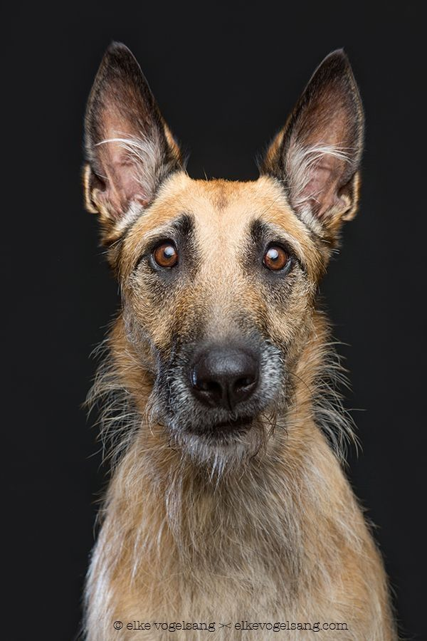 Photographer captures dogs looking very skeptical of the camera