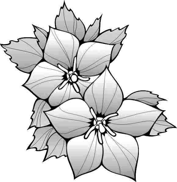 flor de navidad para colorear - Selo.l-ink.co