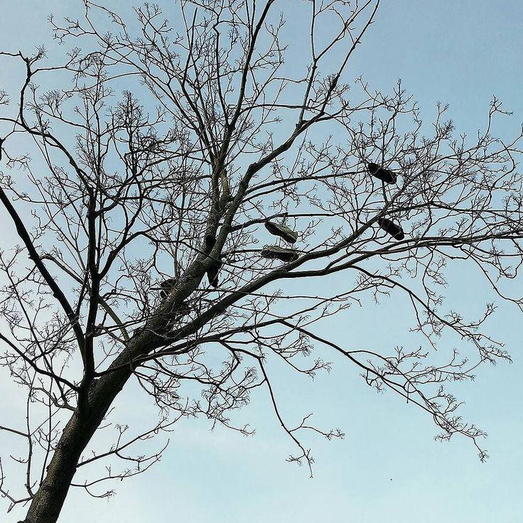 Na drzewach w #Szczecinek pojawiły się już pierwsze liście :)