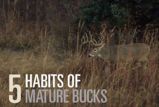 """A big buck sanctuary is simply an undisturbed area where deer feel safe. It seems that many hunters mistake """"undisturbed"""" for """"unhunted."""""""