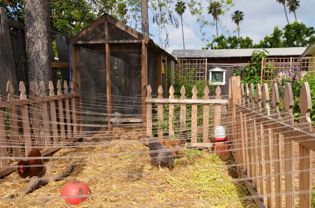 Good idea to run string over the top of your chicken run. Cheaper than total fencing and better looking than a tarp. Probably wouldn't work for me cuz little boy would TEAR it down. Like the wooden fence looks much better than just wire.