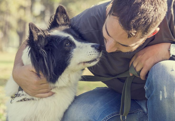 2015 Christmas Gift Guide for a Man and his Dog Female