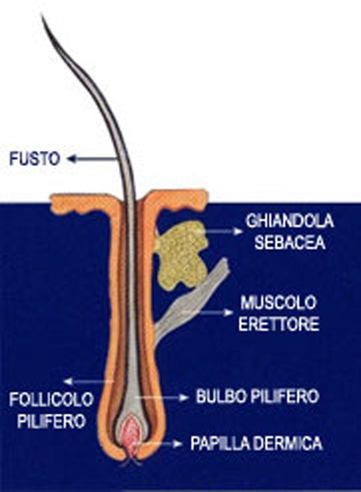 6 consigli per proteggere i tuoi capelli d'estate. Visita il nostro sito: http://stefab.wix.com/parrucchierecaosroma#!blank/klji7