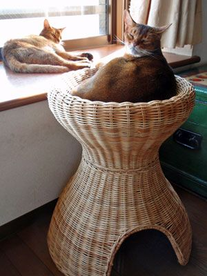 Бася. Хатки і ліжечка для кошаків і цуциків