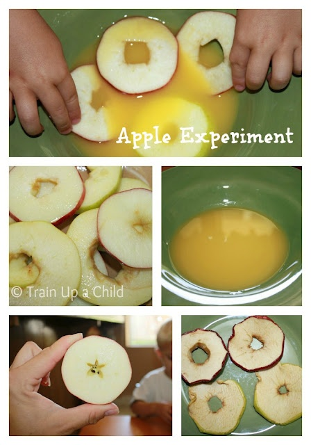 Apple slice experiment and other hands on learning with apples.