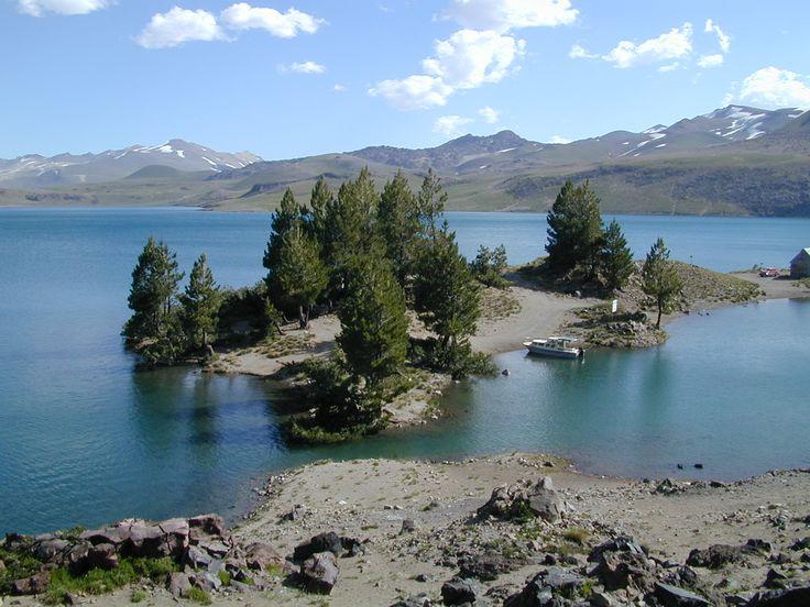 Laguna del Maule, Chile. Bosque de pinos en verano.