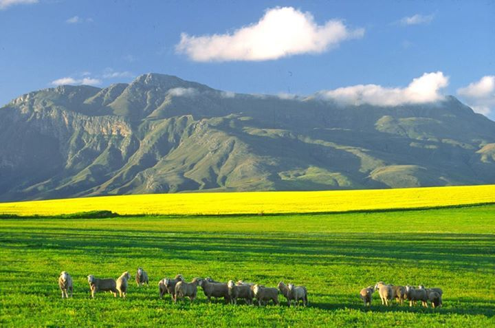 Bredasdorp in Western Cape