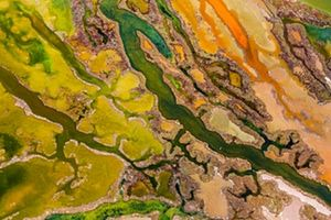 From the Sky winner: <em>The art of algae</em> by Pere Soler (Spain) <br>In the Bahía de Cádiz natural park on the coast of Andalucia, Spain, Soler captured a spring phenomenon, only fully visible from the air. As the temperature warms and the salinity changes, the intertidal wetlands are transformed by colour as bright green seaweed intermingles with multicoloured microalgal blooms. White salt deposits and brown and orange sediments coloured by sulphurous bacteria and iron oxide add to the…