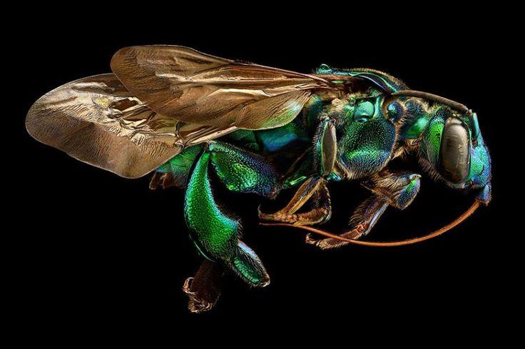 Außergewöhnliche Insektenfotos: Krabbelndes Supermodel – SPIEGEL ONLINE – Wissenschaft – Gabriela Bartlett