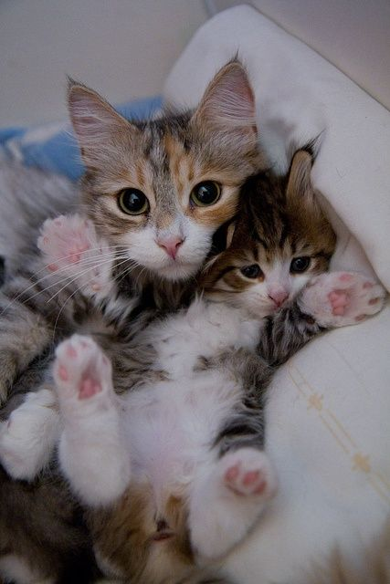 Deux mignons petits Chatons - Darling tiny mother cat and her young #kitten with tiny pink paw pads! BIG CATS LITTLE CATS.