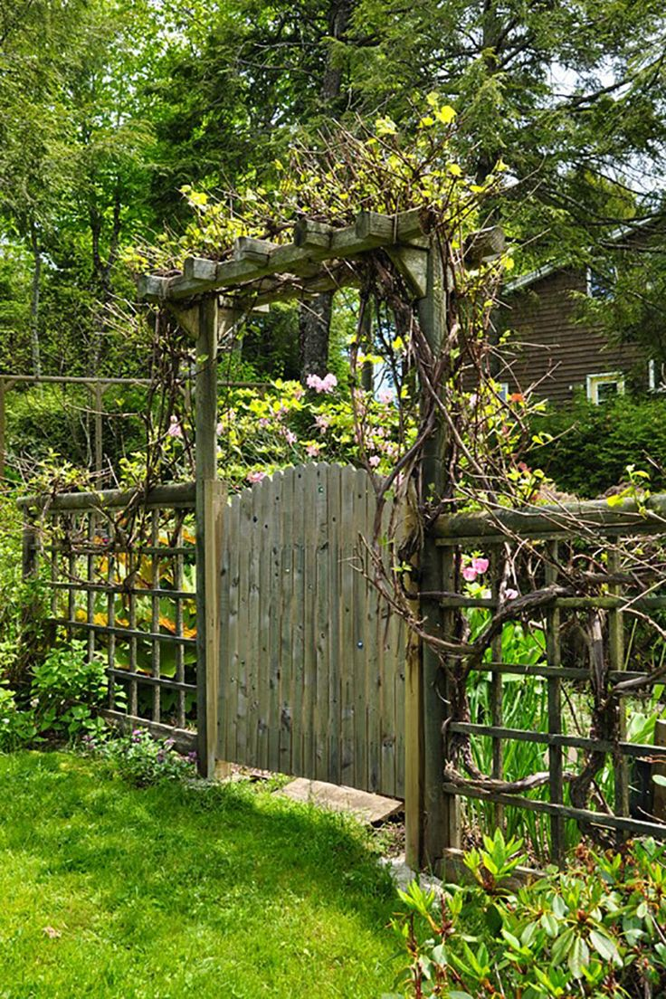 Grape Vine Gate A lovely grape vine climbs and curls around this rustic wooden gate, hiding compost bins on the other side and providing its owners with delicious grape jelly!  See more at Three Dogs In A Garden.  Courtesy of Three Dogs In A Garden