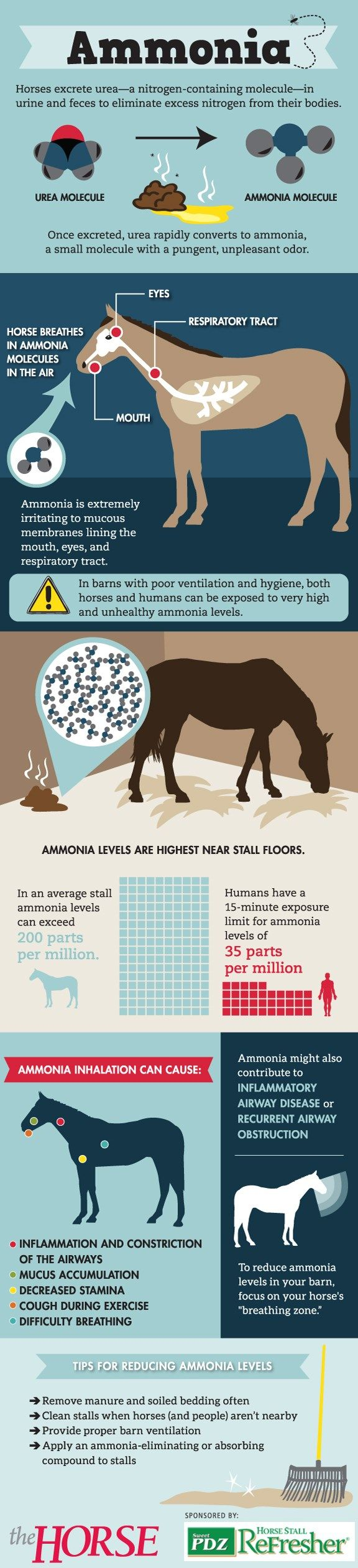 Have you ever walked into a barn and, rather than smelling fresh bedding and horses, you get a strong whiff of a pungent, burning odor? That's ammonia, and its presence can cause serious damage to your horse's respiratory system.  http://www.thehorse.com/articles/33322/infographic-how-ammonia-impacts-your-horse