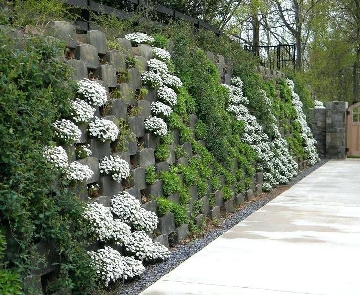 Plant Coverings Best Retaining Wall Cover Ideas Images On Retaining Walls Ground Cover Plants And Landscapi Garden Retaining Wall Vertical Garden Screen Plants