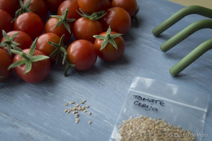 Como plantar tomate em varanda