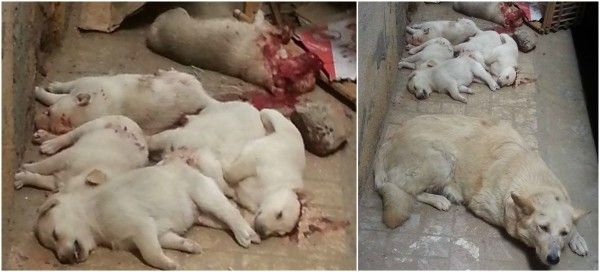 Egyptian Man Destroys New Born Puppies By Bludgeoning Them Using A Blunt Object With Nails! Demand A Severe Punishment! | PetitionHub.org