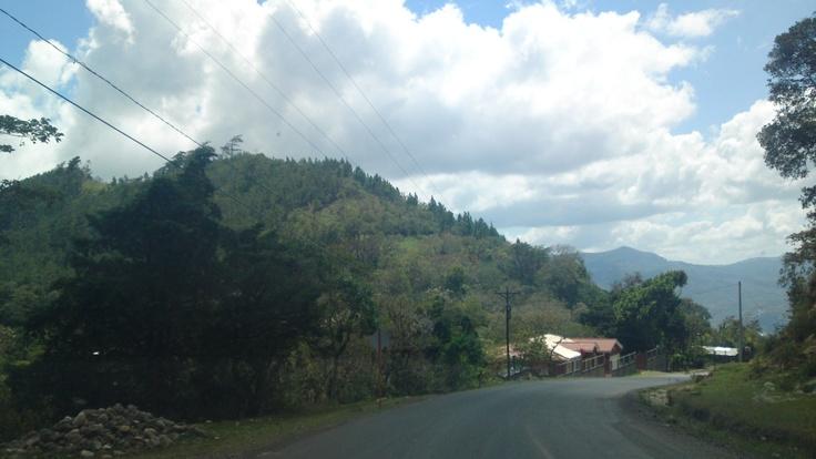 Bosques de Pino, Jinotega: Forests, My Nicaragua, Pine