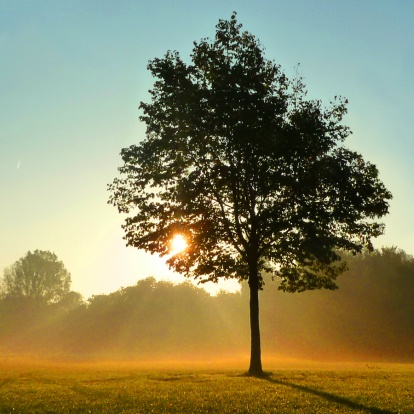 Herfst-boom in de mist, foggy autumn tree. http://www.kaartje2go.nl/kaartencollecties/creagaat---herfst?sk_id=161
