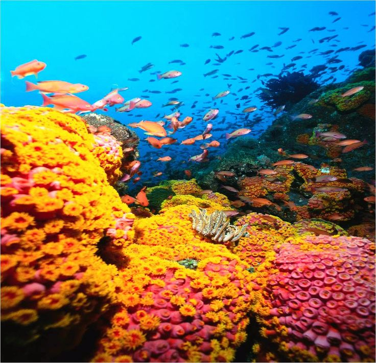 Images and Pictures of Nature: Healthy coral reef