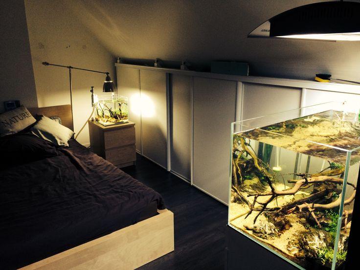 Emma 39 S Bedroom Aquascaping Aquarium Pets Aquariums