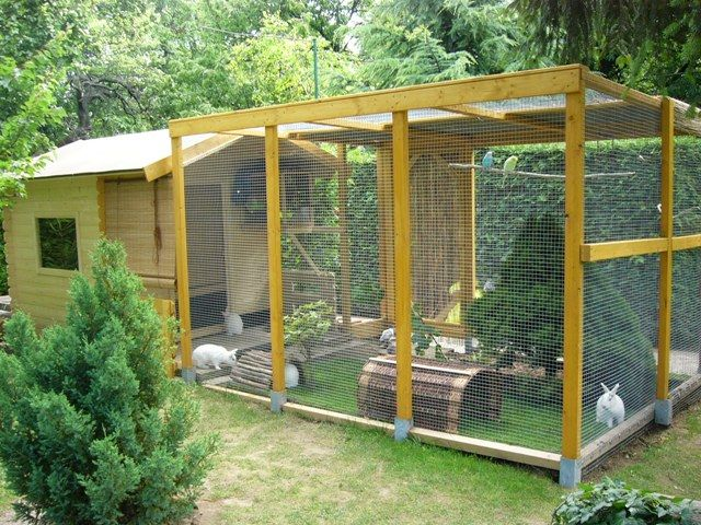 Rabbit Outdoor House and Enclosure Idea