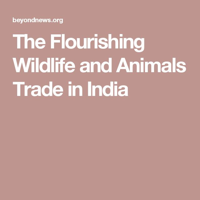 The Flourishing Wildlife and Animals Trade in India