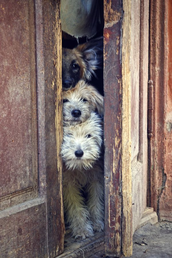 who is there?The Doors, Puppies, Old Dogs, Peek A Boos, Pets, Totems Pole, Baby Animal, Terrier, Furries Friends