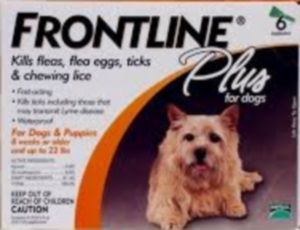 Buy Frontline For Dogs – Best Protection Against Fleas And Ticks