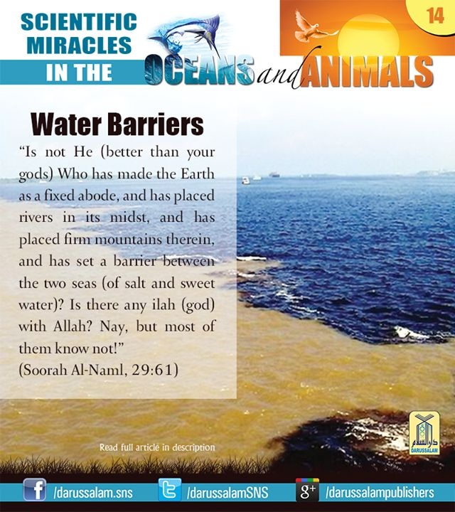 17 Best images about miracles. Islam ♡ on Pinterest | E ...