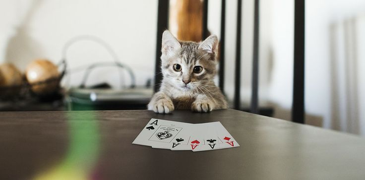 POKER FACE by Plastikete  on 500px